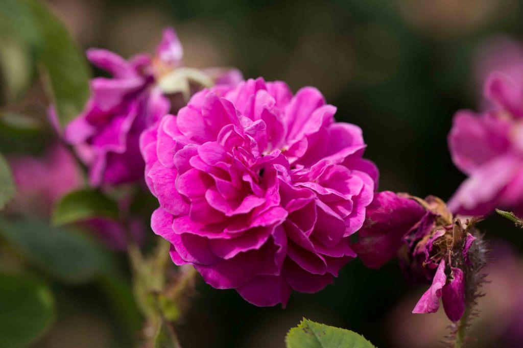 Mme Rose Chéri